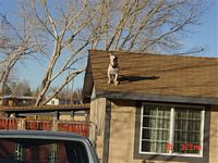 Roof Hazards